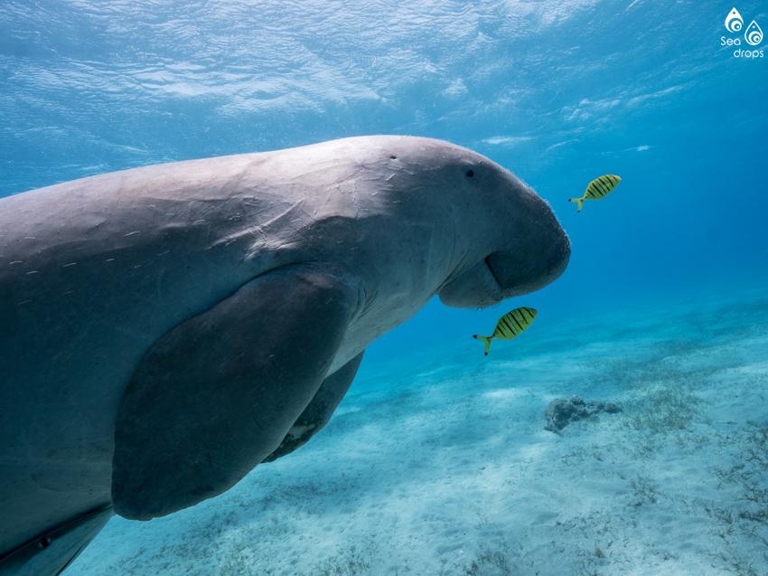 dugong-blog.jpg